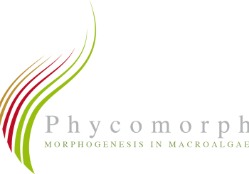 Phycomorph Conference at CUT: 29-30 Sept